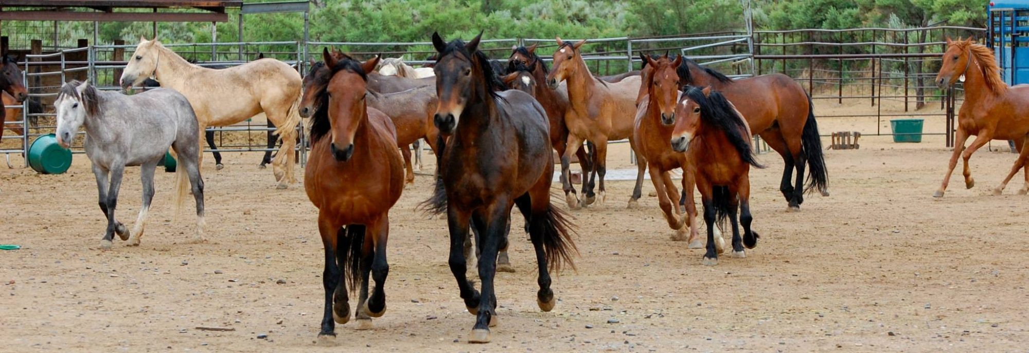 Magic Mustang Tamer