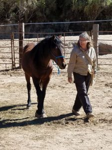 Wild horse trainer and wild horse