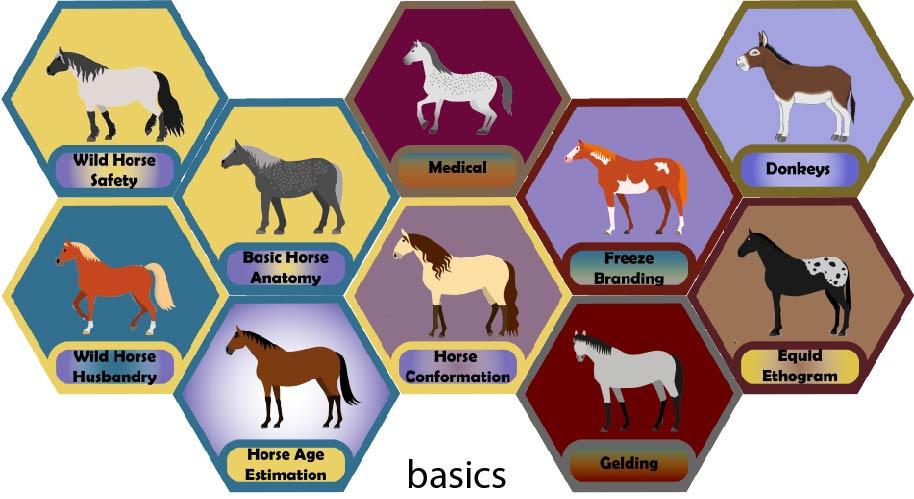 Badges awarded for modules on Wild Horse Safety, Wild Horse Husbandry, Basic Horse Anatomy, Horse Age Estimation, Wild Horse Medicine, Horse Conformation, Freeze Branding, Gelding, Donkeys, and Equid Ethogram.